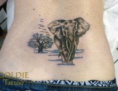 GOLDIE-TATTOO-Tarbes.sept.2017.web.elephant-dos..jpg